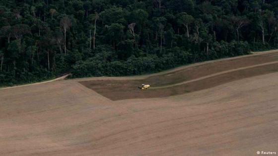 Remover a floresta reduz em até 50% os níveis de carbono no solo
