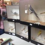 Winnende vogels