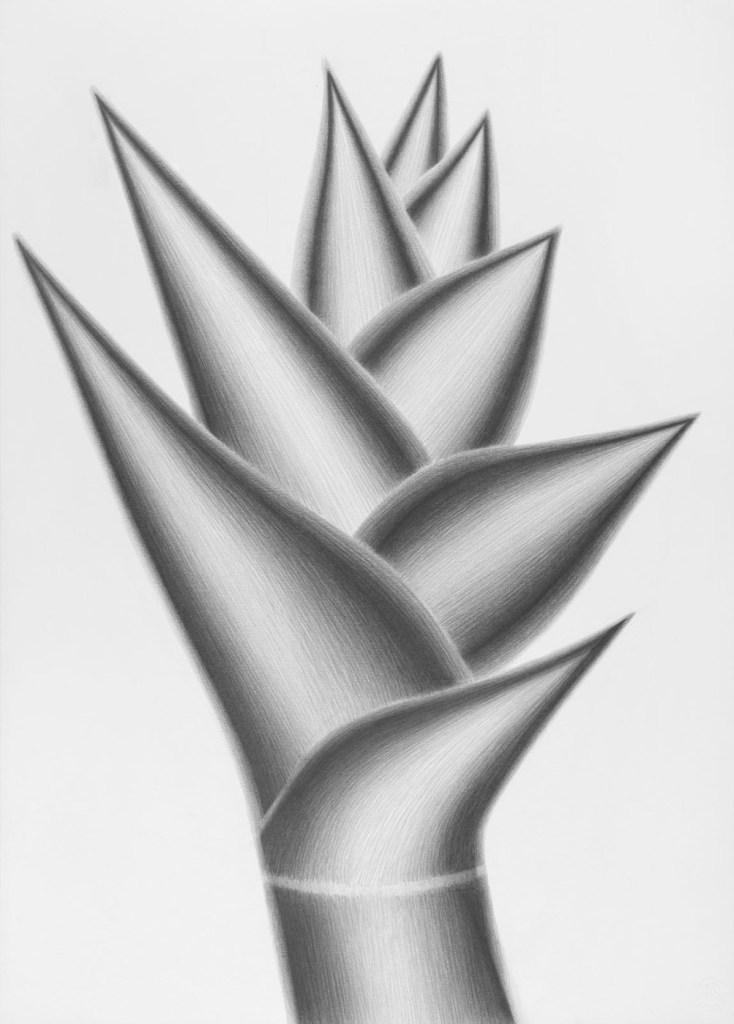 nieves-torralba-botanica-magica-12
