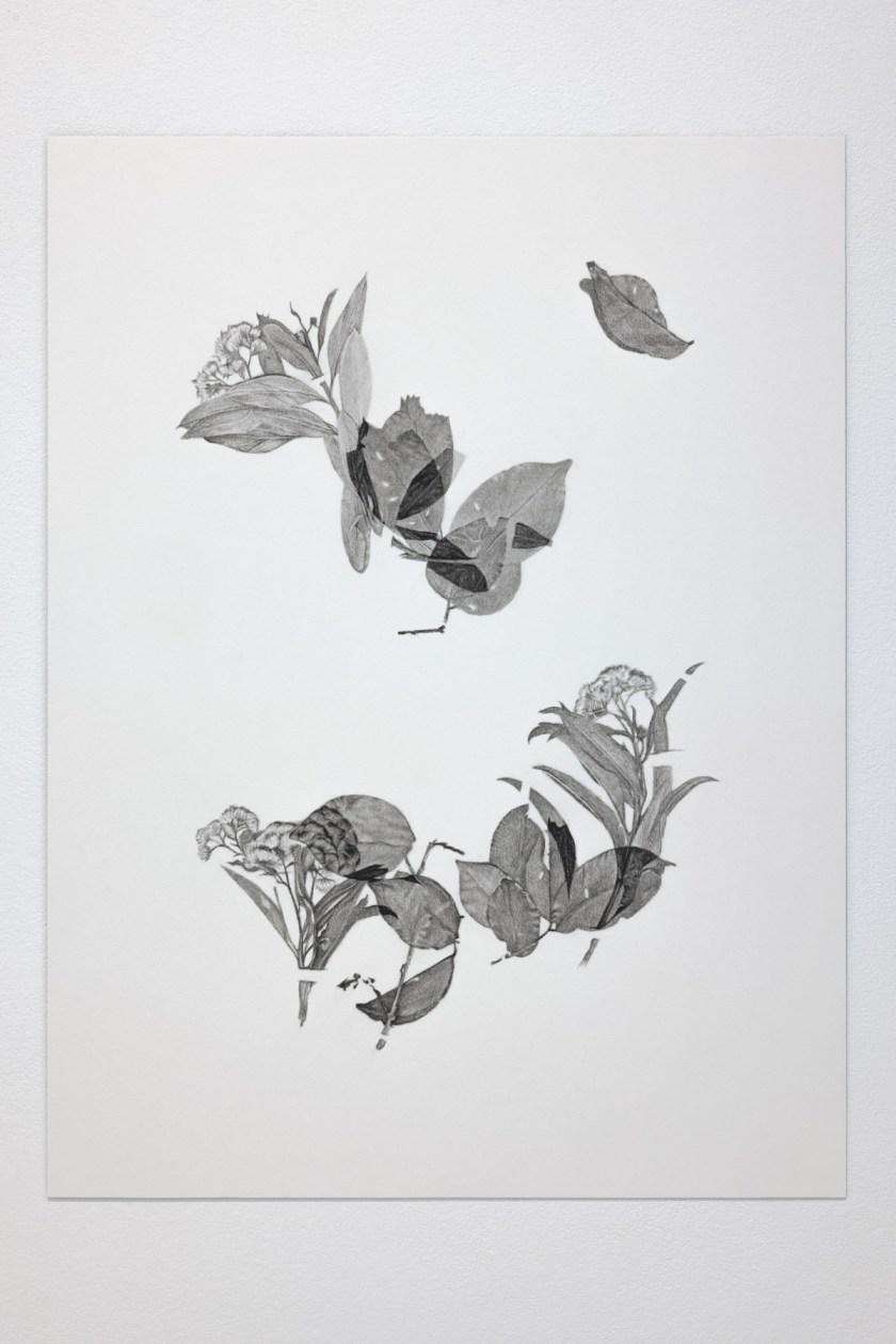 gabinete-de-dibujos-ernesto-casero-las-plantas-perdidas-04