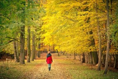 Kentucky Fall Wallpaper 2017 Morning Walk The Top 3 Benefits Of An Early Stroll