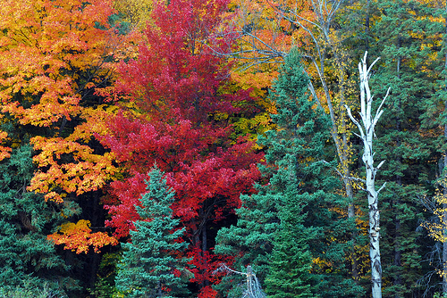 colorful fall trees