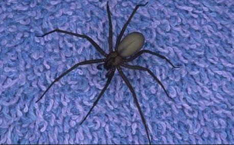 spider sitting on purple carpet
