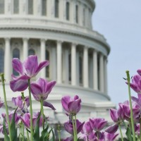 Capitol_Flowers