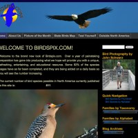 An extensive collection of bird photos, organized using WordPress as the underlying CMS. Custom coded category structure and design. BirdsPix.com