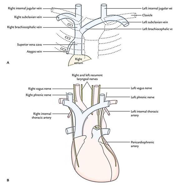diagram lower pelvis
