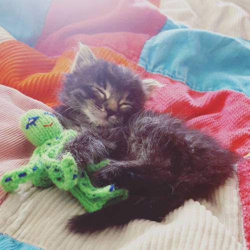 Who wouldn't feel happier cuddling a tiny kitten and a finger puppet?!?