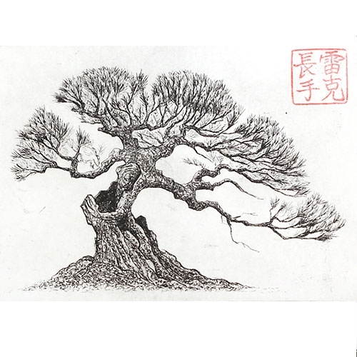 wiring chinese elm bonsai