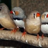 Cage birds stolen