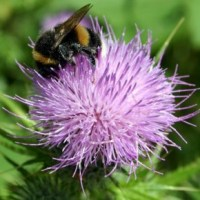 Eastleigh nature walk plots bee-friendly areas