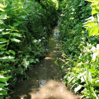 Faulty sewage tank causes footpath flooding