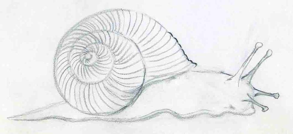how do you draw a diagram