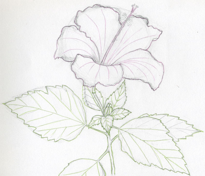 Flower Drawing - Lessons - Tes Teach