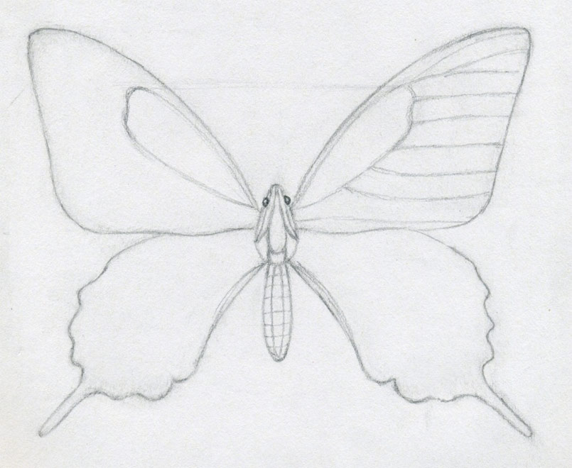 diagram of butterfly