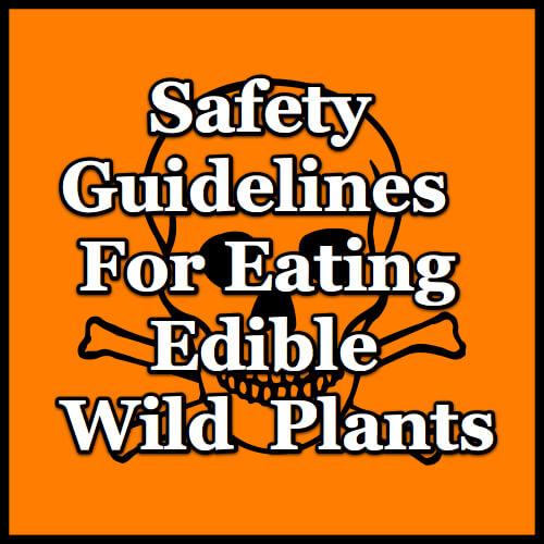 wild-food-safety