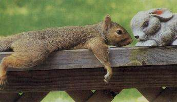 squirrellove.jpg