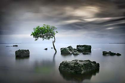 2607587-2-zen-tree