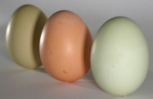 800px-eggs_green_brown_on_end