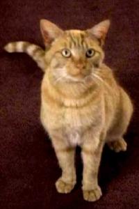 spot_datas_cat