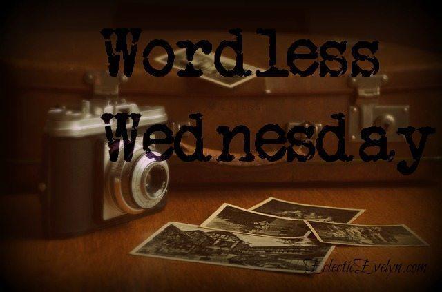 #WordlessWednesday EclecticEvelyn.com