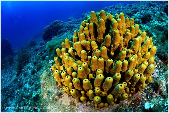 Under The Sea Wallpaper Hd 191 Animales Sin Cerebro