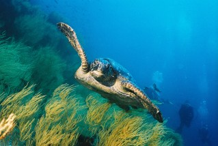 003 Galapagos