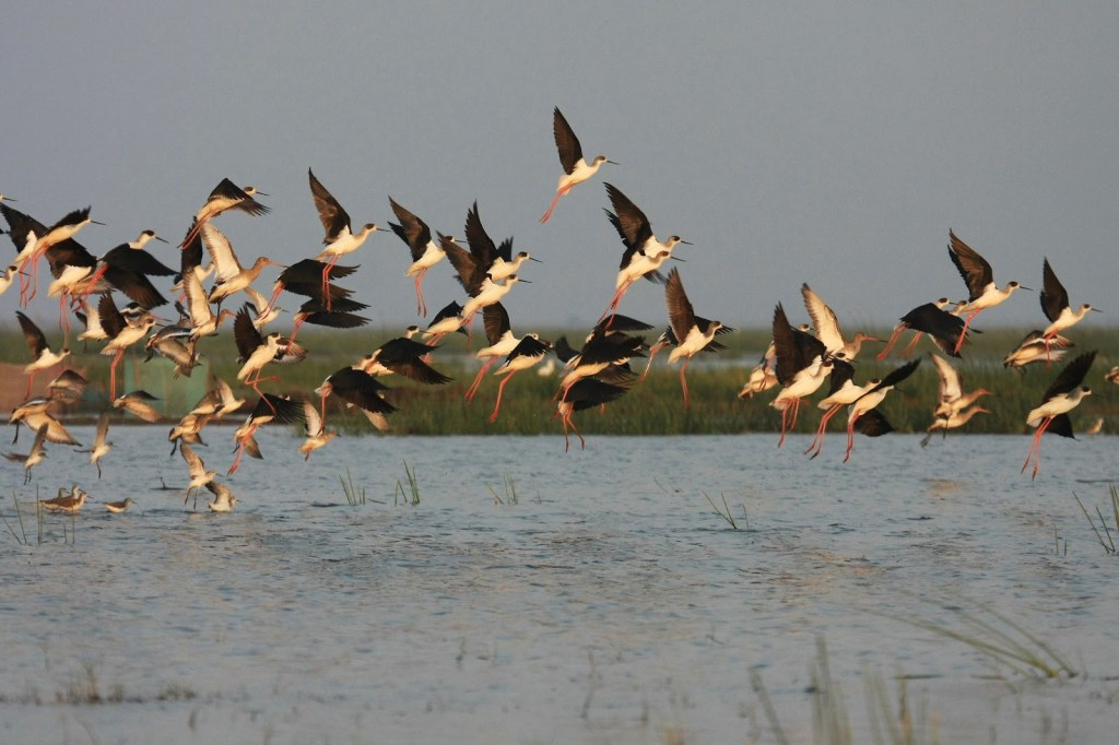 Birds' Paradise