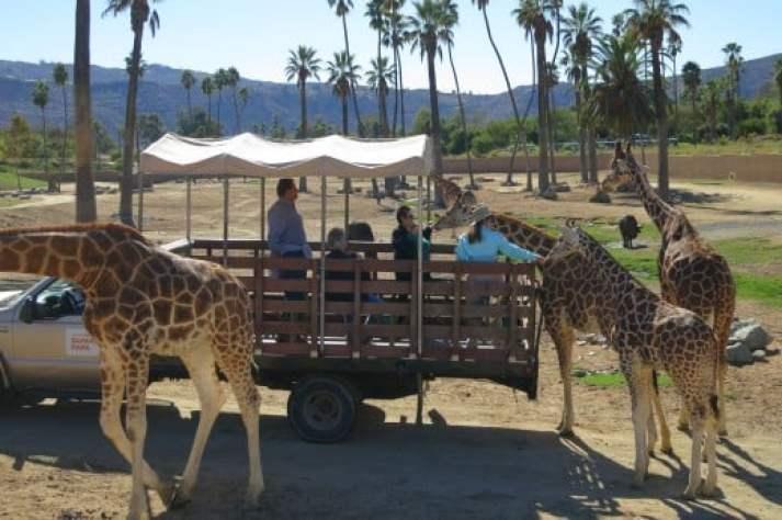San Diego Safari Park Best Tour