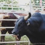 Sandy Oaks Pro Rodeo-21