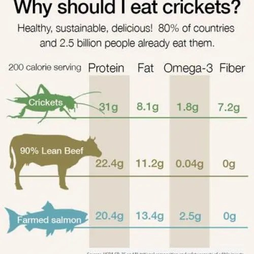 Edible Insect Nutrition Information