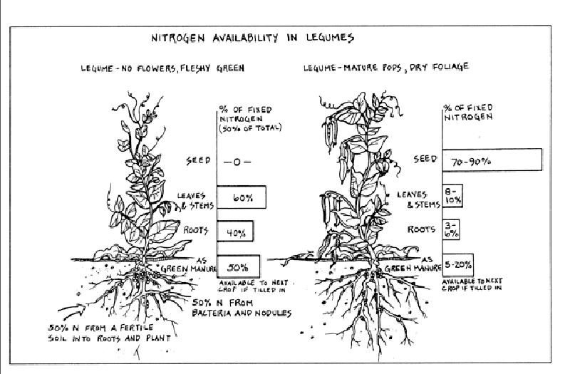 rosemary herb diagram