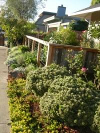 Front Yard Edible Garden Ideas Photograph | Edible Landscapi