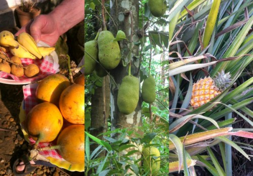 Fruits: Lichees, Passion Fruit, Baby bananas, Jack Fruit, Pineapple