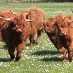 Visit the Royal Highland Show