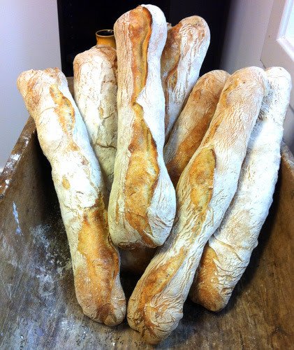 Traditional style baguettes. No slashing, a flap is made which is initially placed underneath, then flipped over before baking.