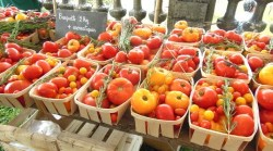 Mixed varieties of tomatoes to buy
