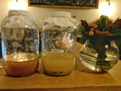 Kombucha fermenting happily at Aizle.