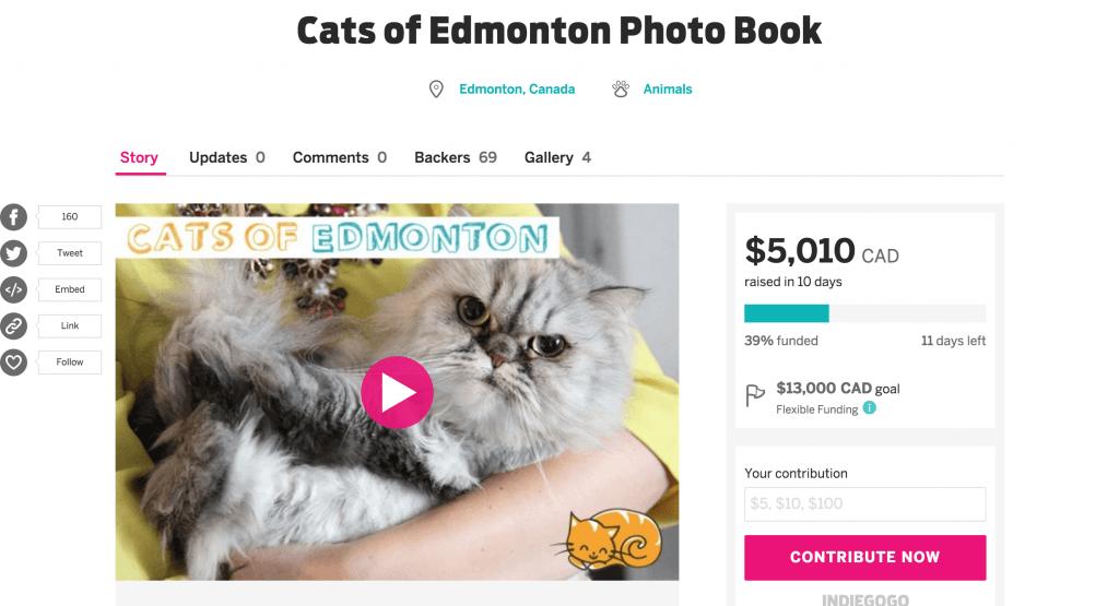 Cats of Edmonton Indiegogo Crowdfunding