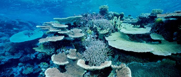 coral-great-barrier-reef-bleached