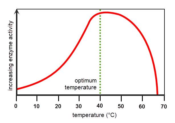 diagram of enzyme temperature