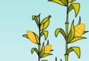 Leyendas para niños: La leyenda del maiz