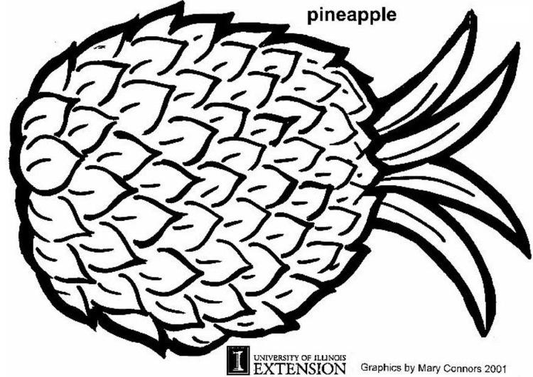 Disegno Da Colorare Ananas