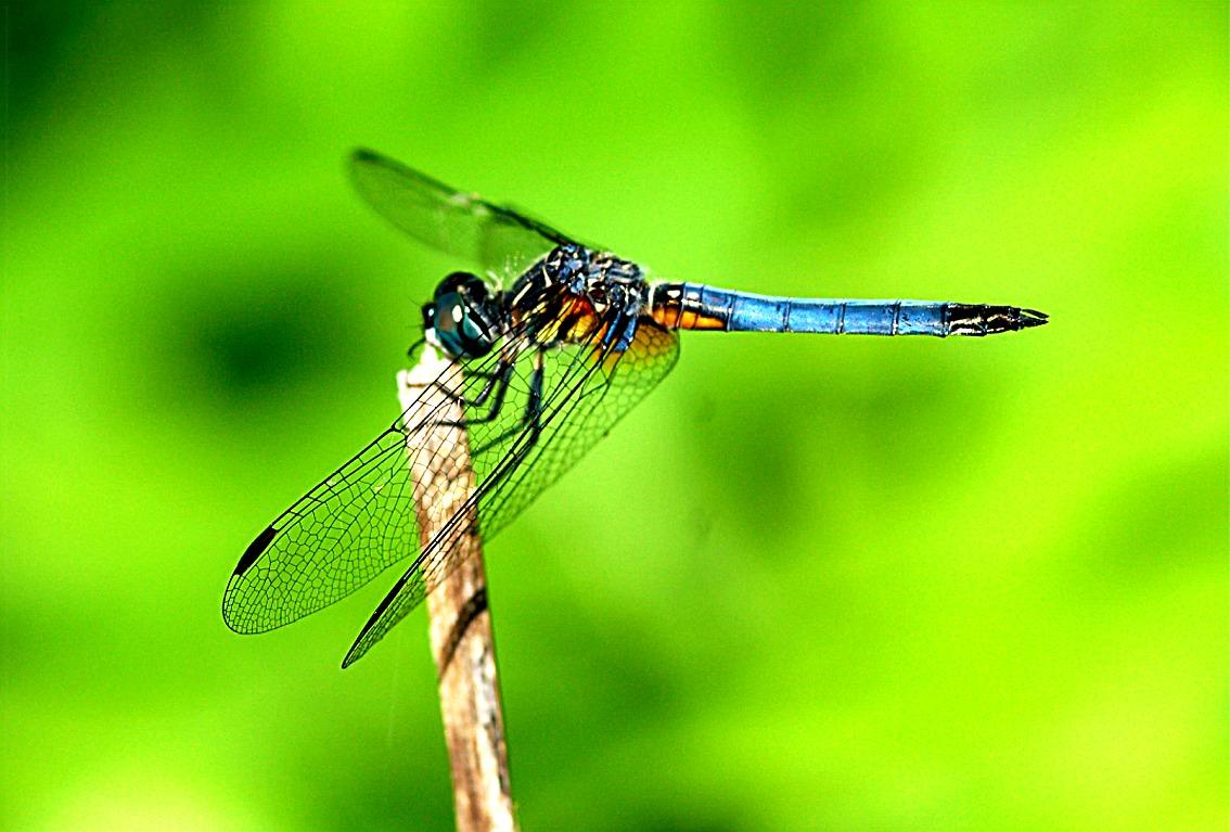 Devil 3d Hd Wallpapers Edupic Dragonflies And Damselflies