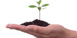 seedsgrow