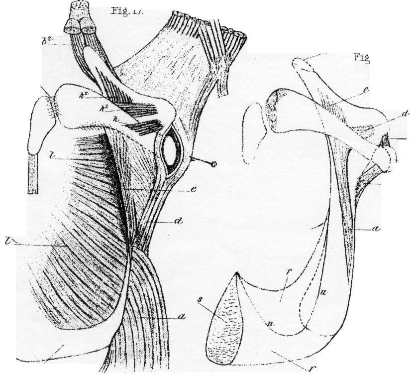 diagram showing hip bone