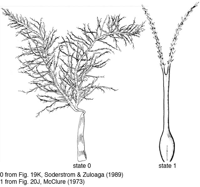 Diagram Elm Tree Diagram free electrical wiring diagram KATI-MARIN