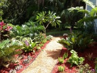 Tropical Plants For Backyard | Outdoor Goods