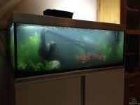 Aquarium EHEIM proxima 325 aus EHEIM proxima 325 von ...