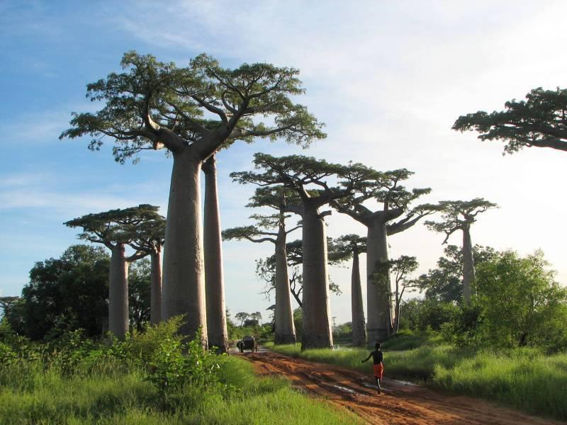 EOTCUK_Baobab