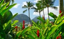 ハワイアンエネルギー PART 3<br>エネルギースポットは身近なところに!